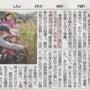 古代米収穫in松根集…
