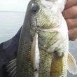 「釣りは人間に気持ち…