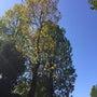 秋の収穫祭散歩  そ…