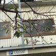 桜咲く、10月後半。