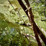 アオコ野池。
