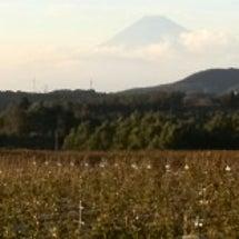 富士山綺麗です