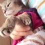 猫侍を観た。。。北村…