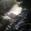 霧雨と光の森の中へ☆