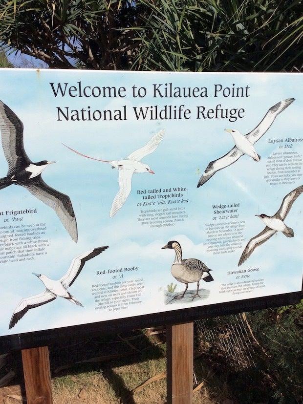 201609_093_KilaueaPoint