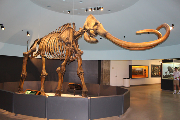 ラスベガスのペイジ博物館