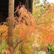 10月のお庭3