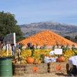 今年のPumpkin
