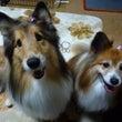 今日は犬の日&トリミ…