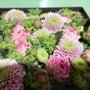 徳山花卉商様 3つ星…