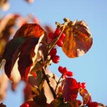 早く紅葉する木-花水…