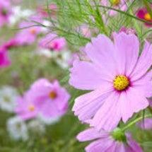 秋の野草:効能と用法…