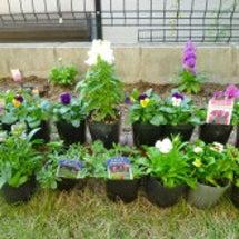 庭のミニ菜園を花壇へ…