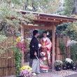 神戸相楽園撮影〜菊花…