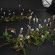 花とコラボ撮影 -W…