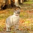 ◆秋色の中を散歩ちう…
