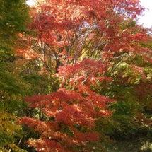 秋真っ盛り!
