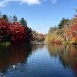 紅葉に染まる休日