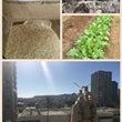 タツミ農園コニーの畑
