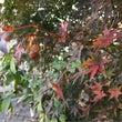 秋らしい写真