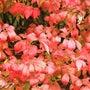 紅に染まるつつある花…