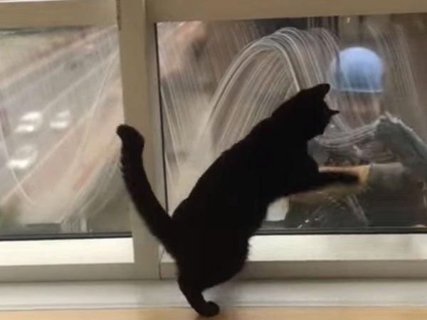 窓拭きのおじさんと友達になった黒猫