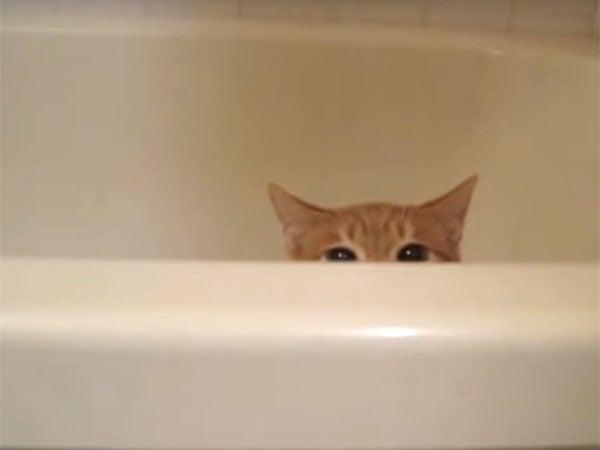 ビュン!と飛び出して、ゆっくり沈む猫