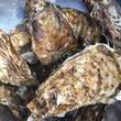 殻付き牡蠣販売