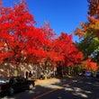 紅葉が美しい住宅街♪…