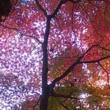 秋の景色と追悼 ゾル…