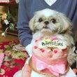 ぶんちゃん誕生日♡