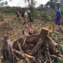 地球の山林伐採監視に…