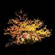 花は心のビタミン♪