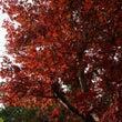 干し物の秋。