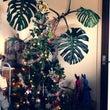 クリスマスツリーだし…
