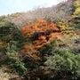 三段峡紅葉狩り