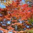 山中湖紅葉まつり