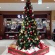 クリスマスツリー登場…