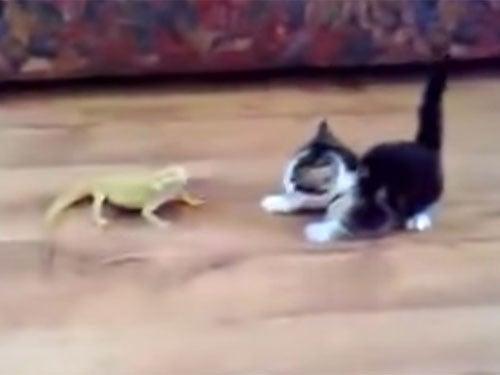 トカゲに挑む子猫