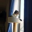 【ポコマル猫日記2】…