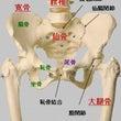 骨盤への理解