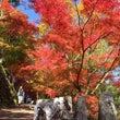 高城山展望台の紅葉