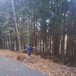 落ち葉掃きが始まりま…
