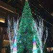 クリスマスイルミネー…