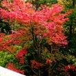 美しい…紅葉