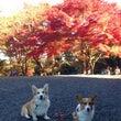 秋色古都と嬉しい再会…
