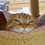 ナナちゃんの寝顔