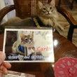 猫音カールのお誕生日…