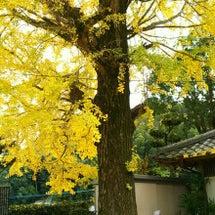 銀杏の木の下で・・・…