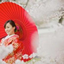 2017年 桜の和装…